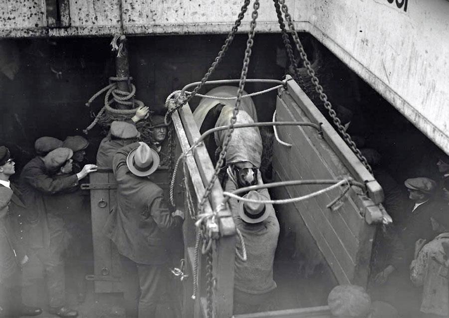 loading-horses-on-boat
