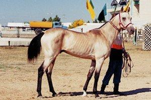 p-yomud-horse