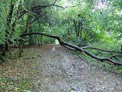 Blocked bridleway