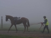 Long Reining in the Mist