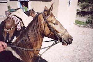 p-toroujg-horse