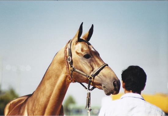 dun-tekke-horsewww