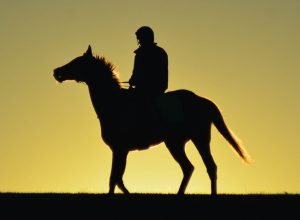 Horse in silhouette