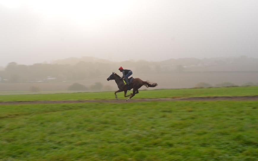 Horse on Epsom Downs